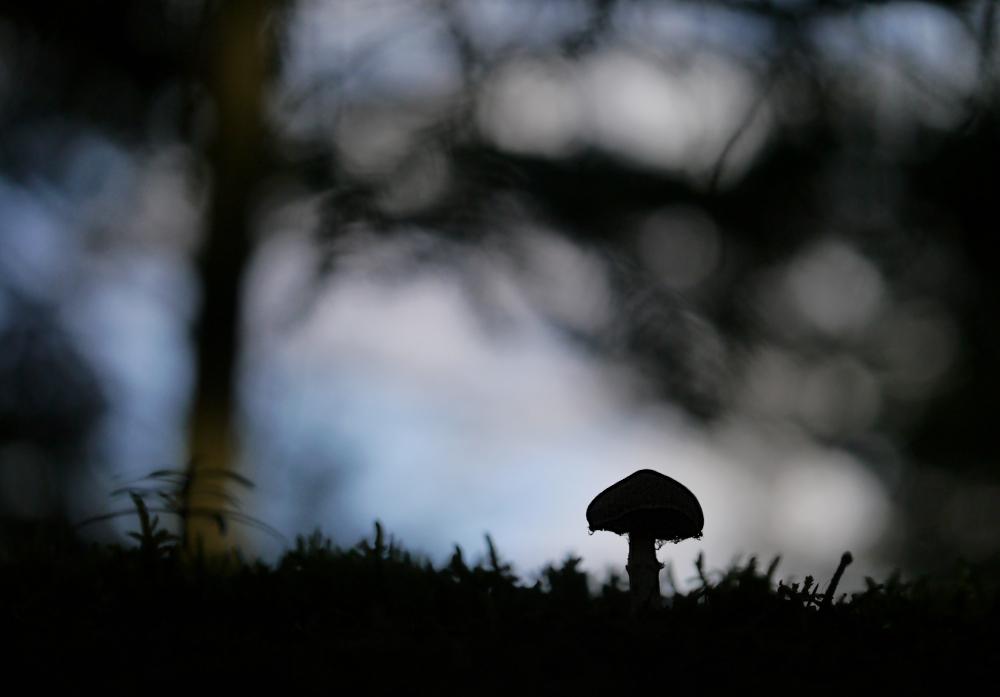 Allein im Wald 3.