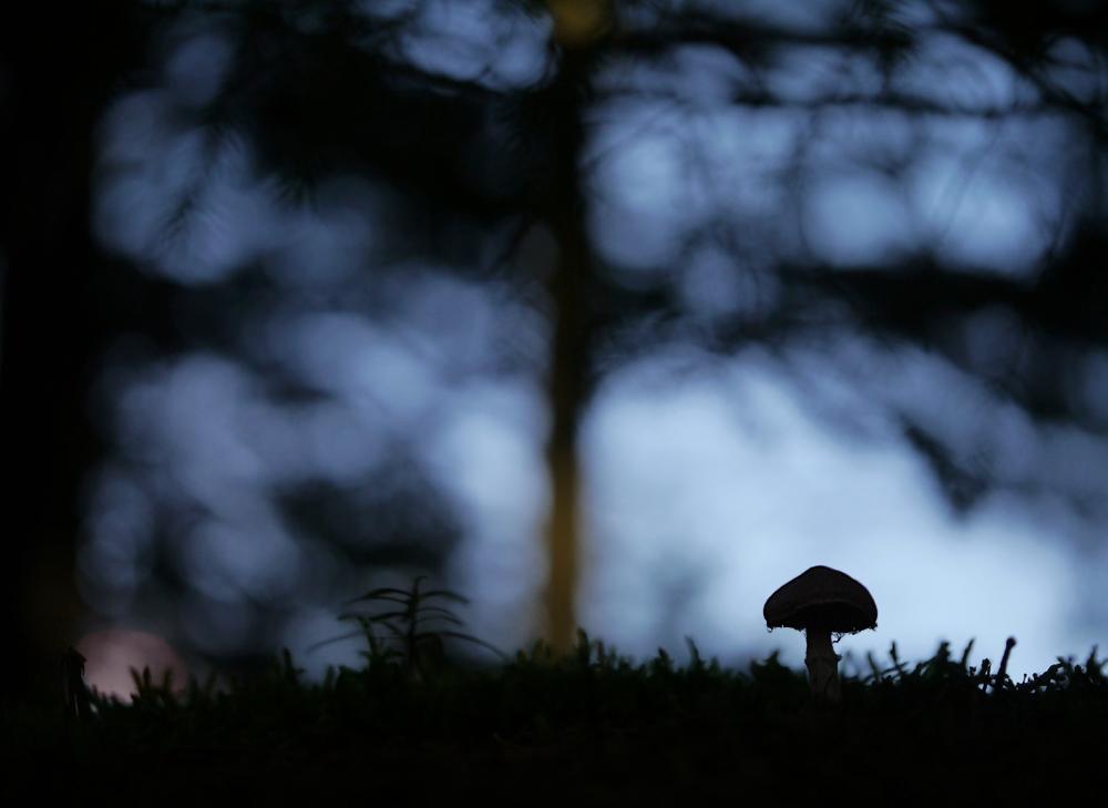 Allein im Wald 1.